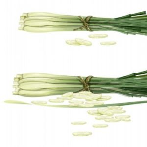 Read more about the article Lemongrass – Essential Oil of the Month