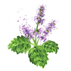 Read more about the article Patchouli – Essential Oil of the Month